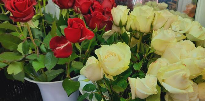 Sevgililer Gününde Bahar Çiçekçilik Hizmetinizde!