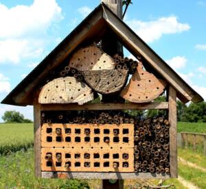 bees-371621_960_720