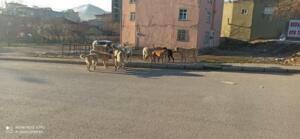 IMG 20210402 155322 438 300x139 Afşinde Sokak Köpeklerine Çözüm Bulunamıyor!