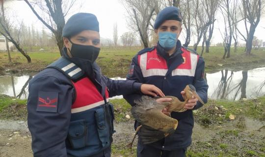 Afşin Jandarma Ekipleri, Balıkçıl Kuşu Kurtardı!
