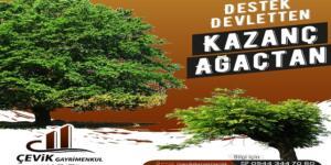 Devlet Vasıfsız Orman Arazilerini 49 Yıllığına Kiralıyor! Son Gün 30 Eylül 2021