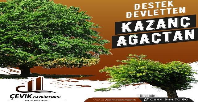 Orman Arazileri Ağaçlandırma Projesiyle Kiralanıyor!